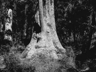 australien-57-309x232 Australien (2005)
