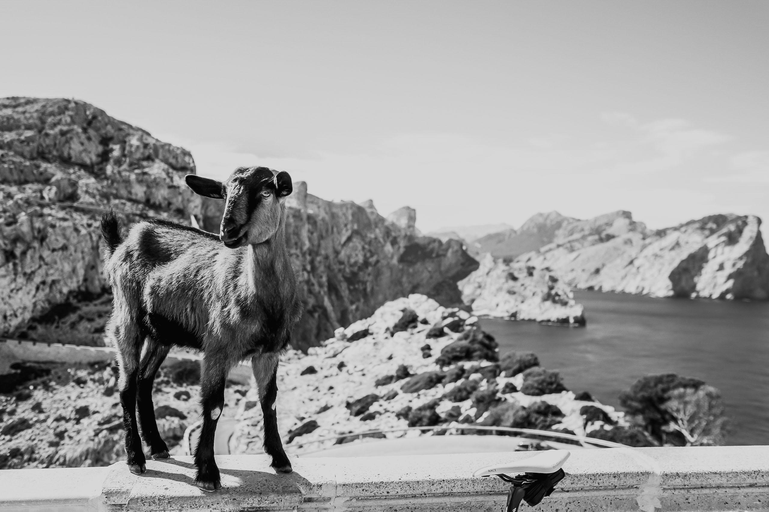mallorca-9 Mallorca (2016)